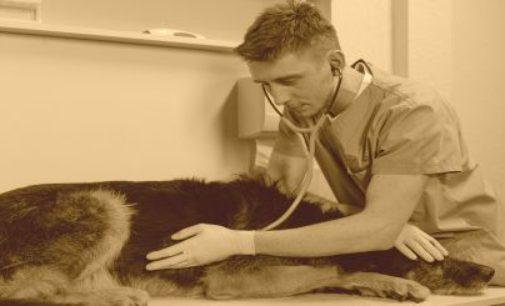 Die häufigsten Probleme von Tierärztinnen und Tierärzten
