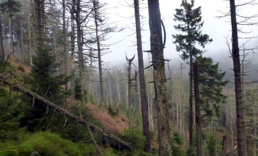 Klimakrise erlaubt keine falsche Waldschwärmerei