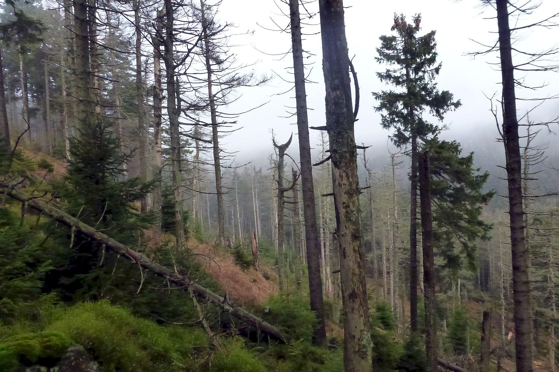 Werden Waldflächen sich selbst überlassen, kommt es nach einiger Zeit zur Freisetzung von CO2.